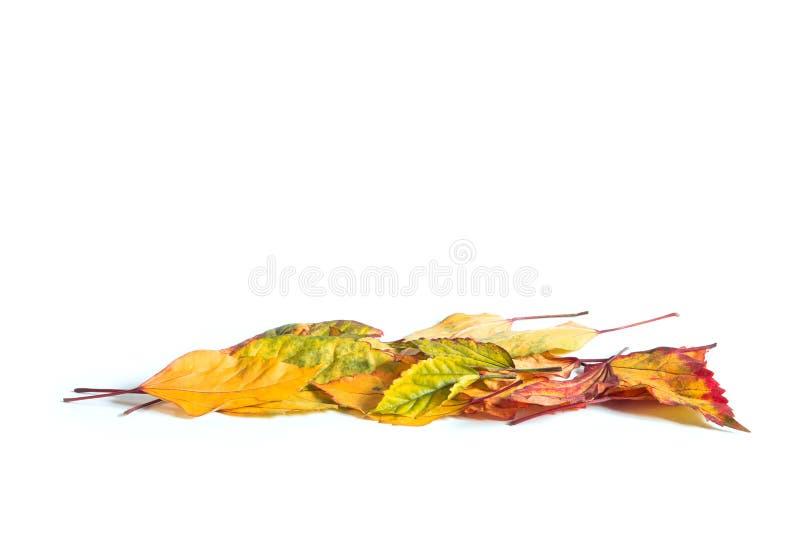 Vue la frontière de belles feuilles d'automne tombées sur le backg blanc photographie stock libre de droits