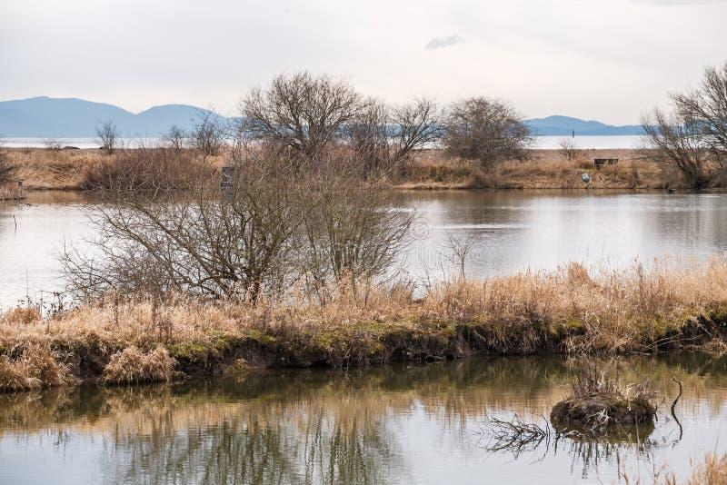 Vue le long de l'eau et des roseaux un jour en retard mat d'hiver avec des buissons dans la distance sur la réserve naturelle photo libre de droits