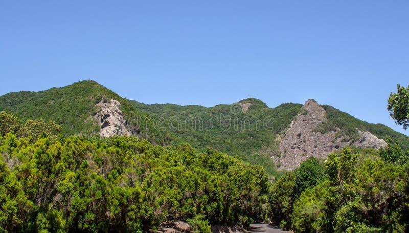 Vue lointaine à une forêt avec des roches images stock