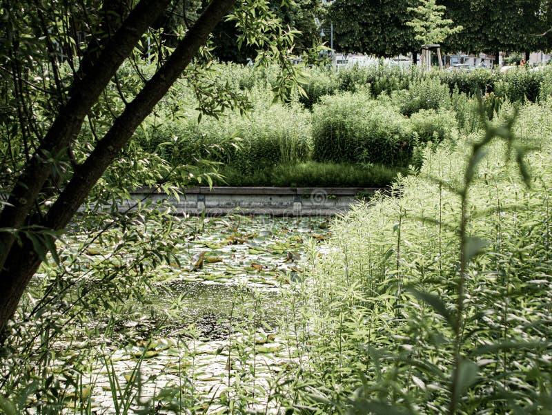 Vue méditative d'un étang couvert de nénuphars photographie stock libre de droits