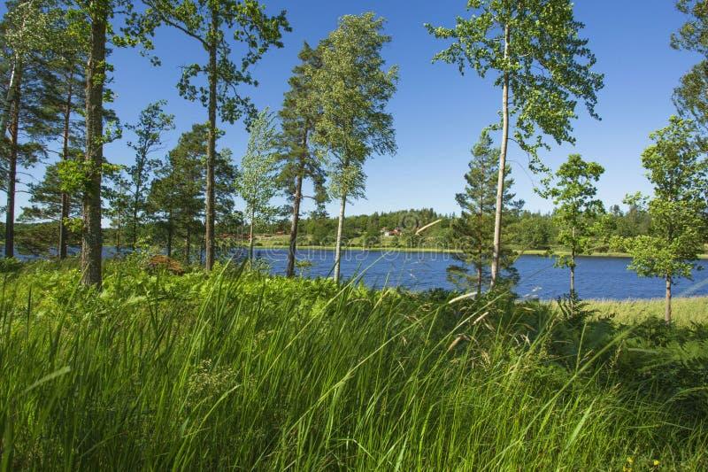 Vue magnifique de paysage de nature le jour ensoleillé d'été Arbres et usines verts autour de lac sur le fond de ciel bleu images stock
