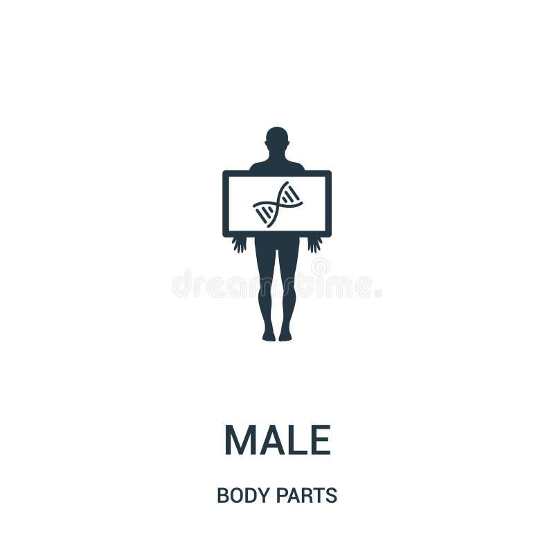 vue masculine d'apparence de silhouette de vecteur d'icône de structure d'ADN de collection de parties du corps Ligne mince vue m illustration libre de droits