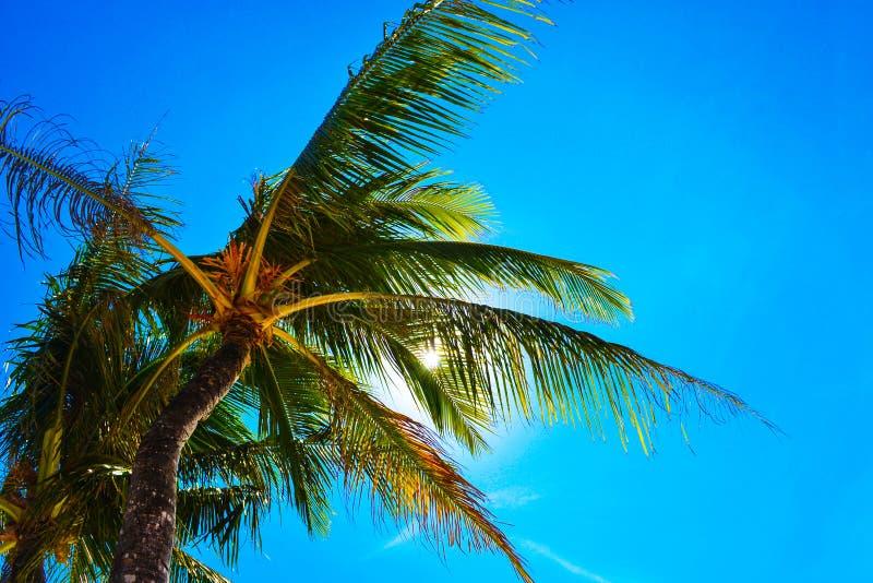 Vue merveilleuse des palmiers et du ciel bleu lumineux EL Nido Palawan Philippines de station de vacances de paradis image stock