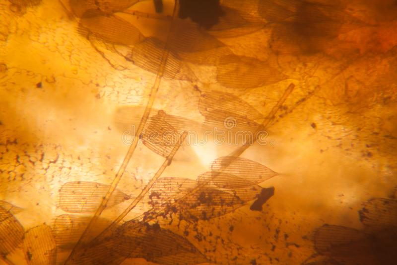 Vue microscopique d'aile de mite images stock