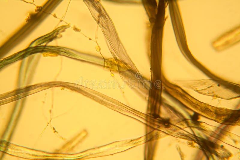 Vue microscopique de la poussière photo stock
