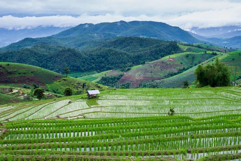 Vue Paddy Field en terrasse dans le village de Mae-confiture, Chaingmai, photos stock