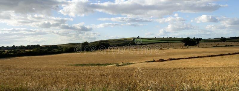 Vue panoramique d'un gisement anglais de paille image libre de droits