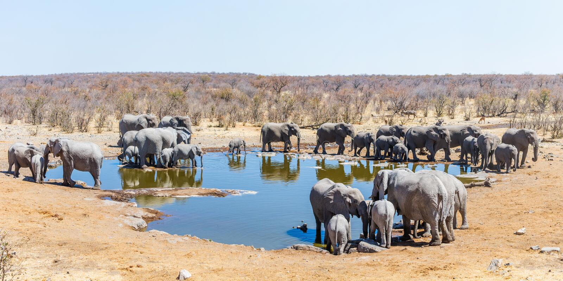 Vue panoramique d'un point d'eau de Moringa avec la famille nombreuse des éléphants africains images stock