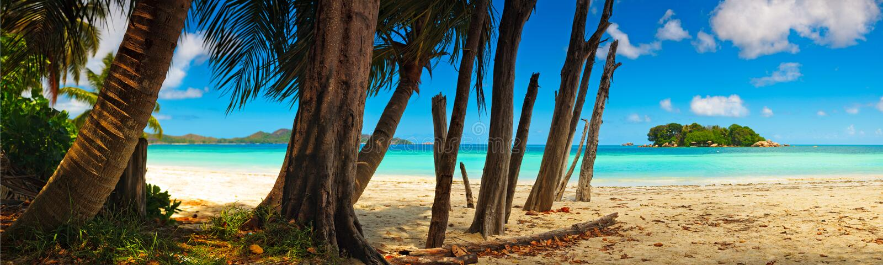 Vue panoramique d'une plage tropicale à l'aube photos libres de droits