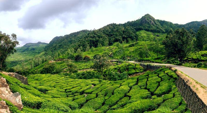 Vue panoramique dans Munnar dans Ghats occidental, Kerala photos libres de droits