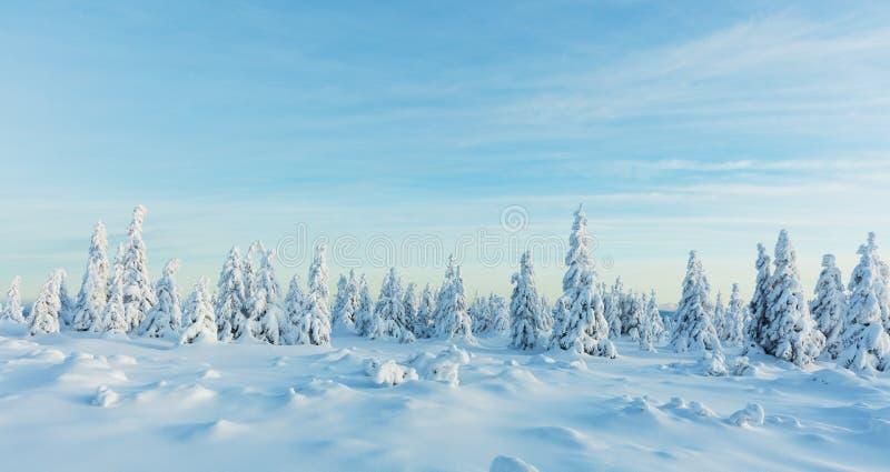 Vue panoramique de forêt impeccable neigeuse d'arbre d'hiver photographie stock libre de droits