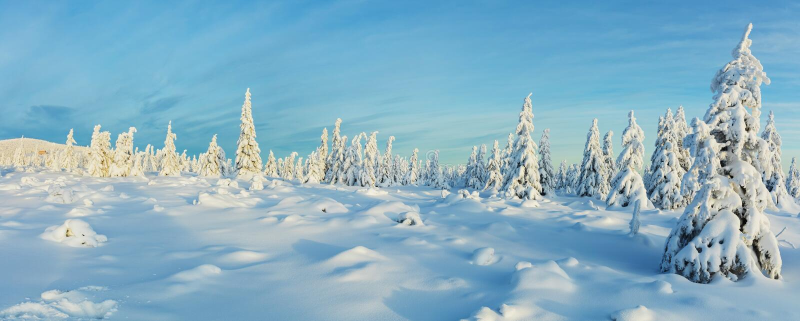 Vue panoramique de forêt impeccable neigeuse d'arbre d'hiver photographie stock
