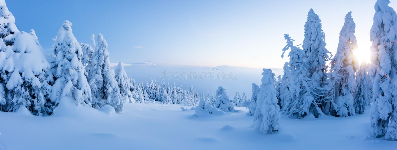 Vue panoramique de forêt impeccable neigeuse d'arbre d'hiver photo stock