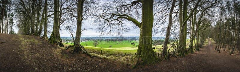 Vue panoramique de région boisée photos libres de droits