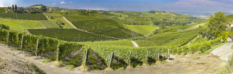 Vue panoramique de vignoble de langhe image stock
