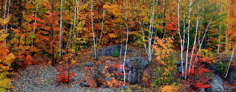Vue panoramique des arbres d'automne photos libres de droits