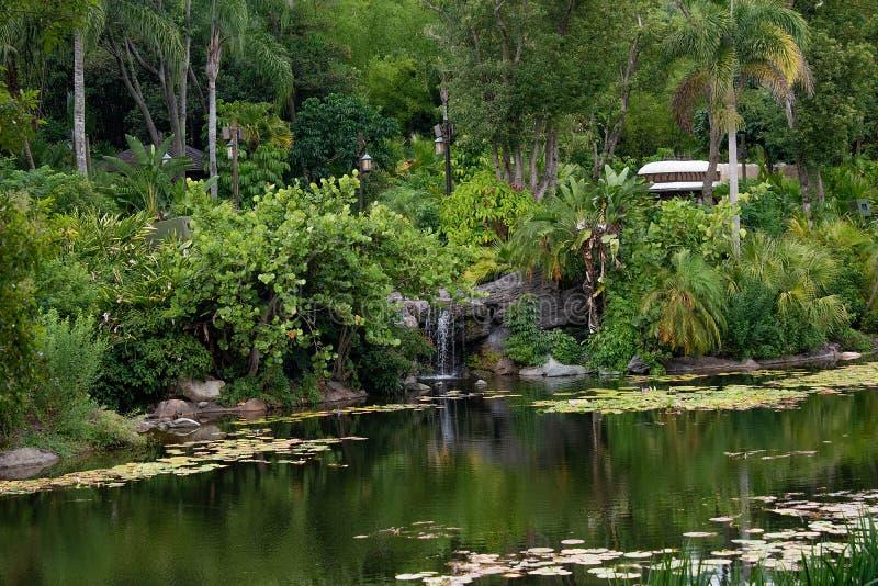 Vue panoramique des cascades, de la rivière et de la forêt tropicale chez le règne animal à la région de Walt Disney World photographie stock libre de droits
