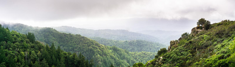 Vue panoramique des collines et des canyons couverts dans les arbres à feuilles persistantes un jour brumeux photo libre de droits