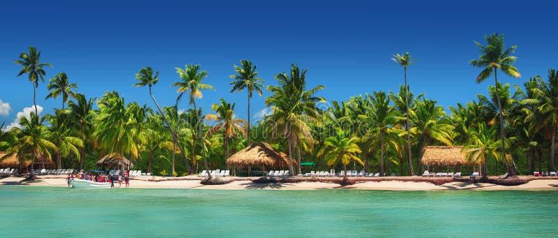 Vue panoramique des palmiers exotiques sur la plage tropicale images libres de droits