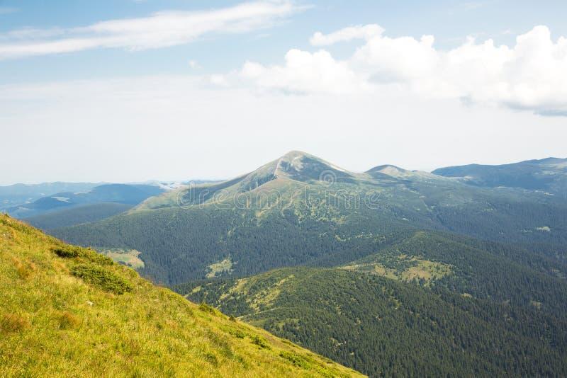 Vue panoramique sur les montagnes des Carpates depuis le mont Petros. Collines verdoyantes avec pins. Repos actif dans les montagn image stock