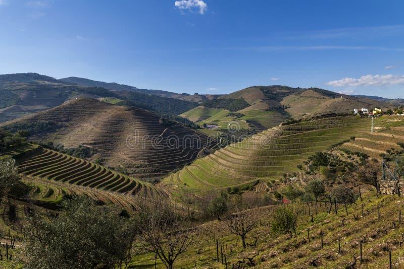 Vue panoramique sur les vignobles en terrasse dans la vallée du Douro, près du village de Pinhao, Portugal image libre de droits