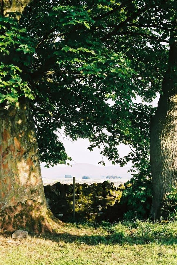 Vue par des arbres images stock