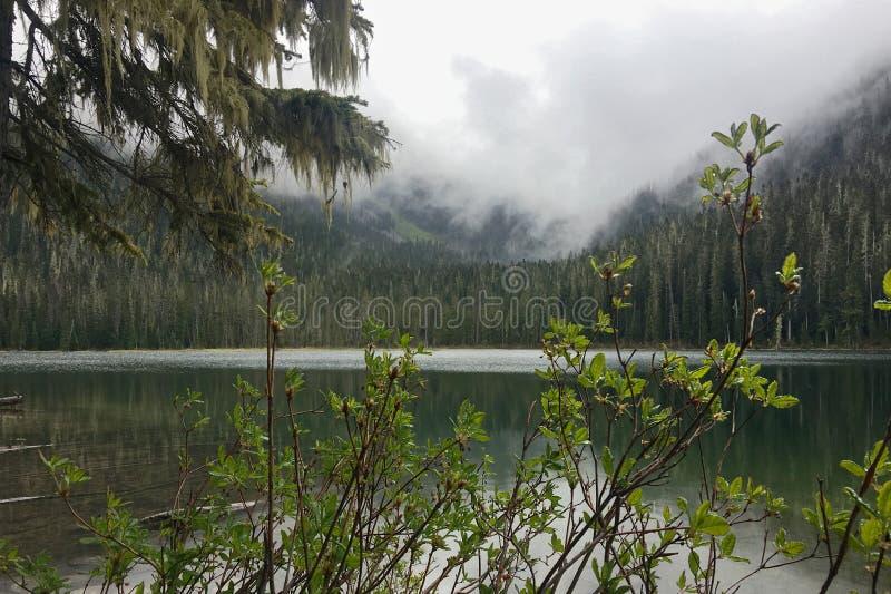 Vue par des buissons de forêt du brouillard de matin au-dessus du lac propre de montagne image stock