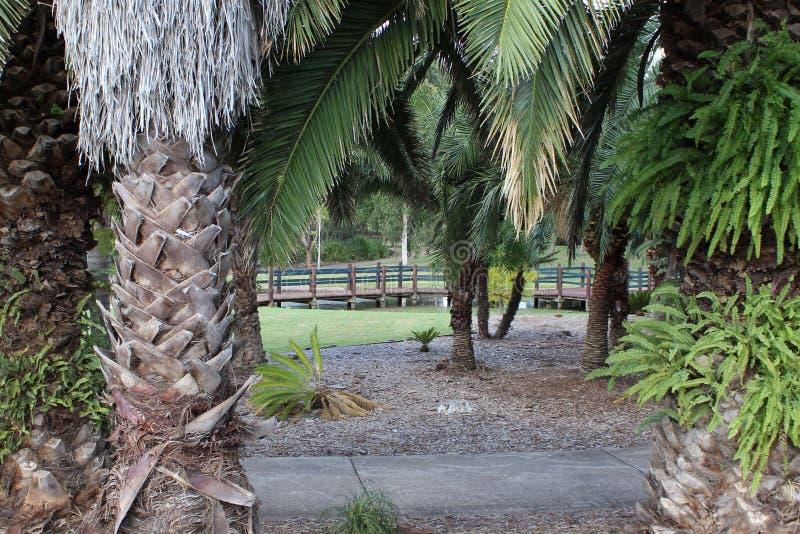 Vue par les arbres photos stock