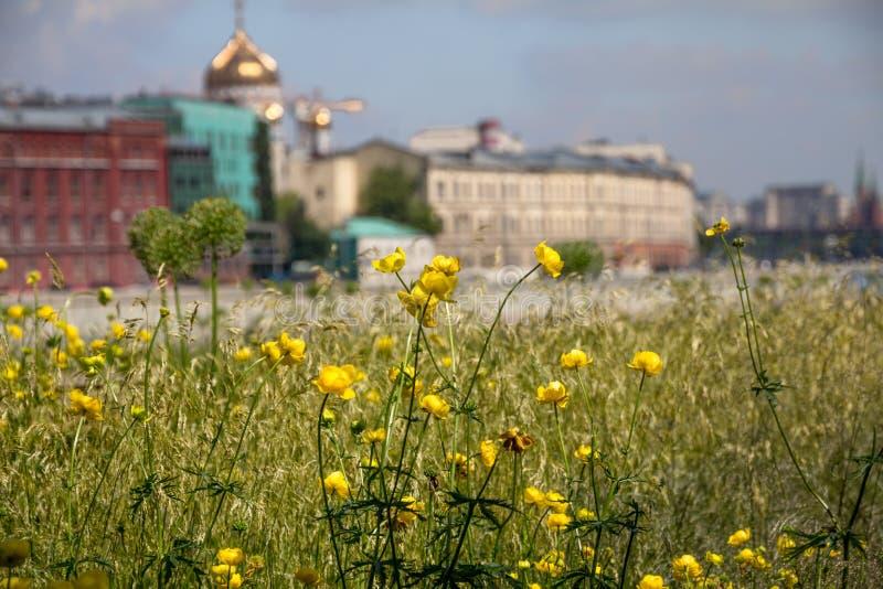 Vue peu commune de Moscou derrière des renoncules balançant en vent photographie stock
