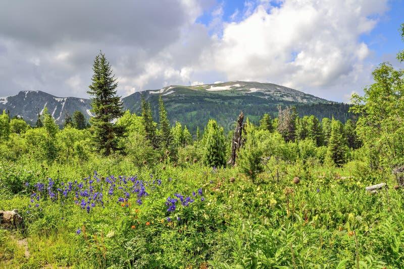 Vue pittoresque des glaciers alpins de floraison de pré et de montagne photographie stock libre de droits