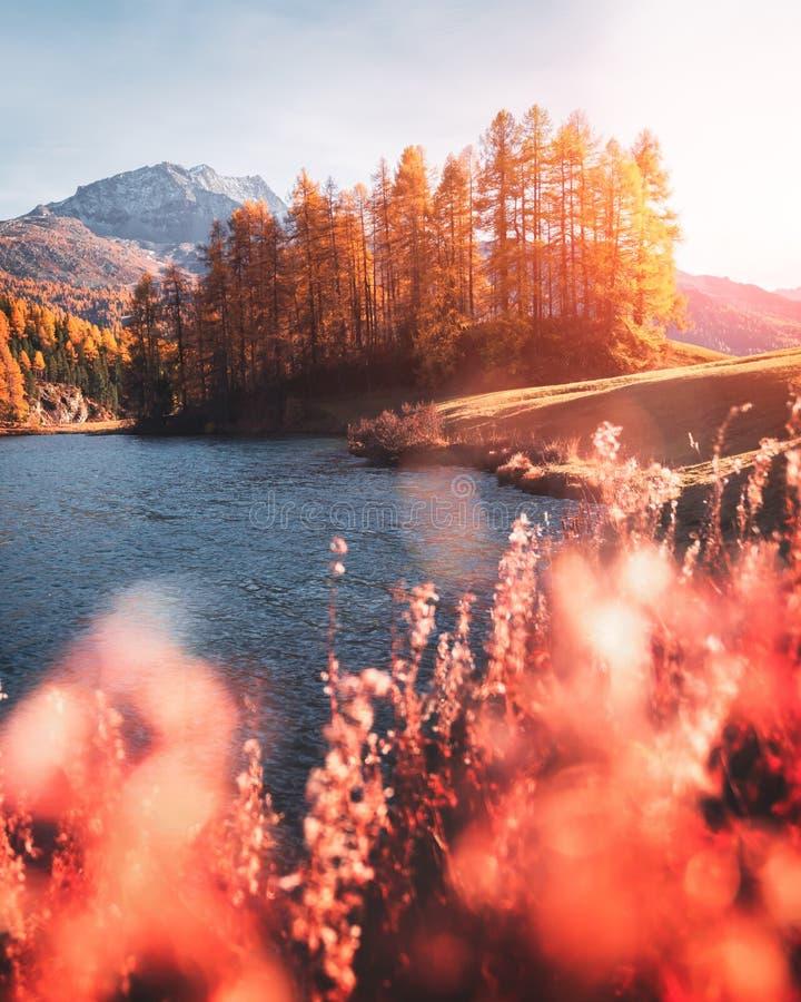 Vue pittoresque sur le lac Silvaplana d'automne dans les Alpes suisses images libres de droits