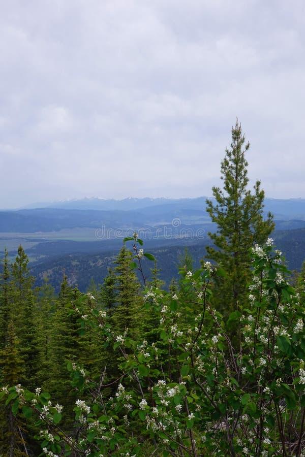 Vue près de grenat, Montana images libres de droits