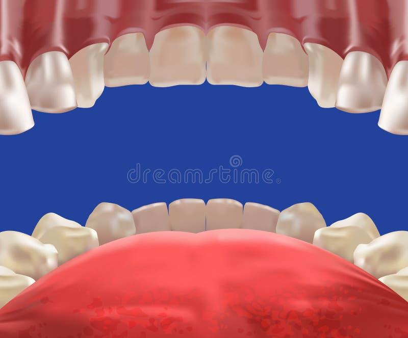 vue réaliste de cavité de bouche 3d de l'intérieur illustration libre de droits