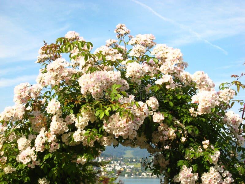 Vue romantique par une porte de fleur au rivage opposé de lac sur le lac Zurich en Suisse images stock