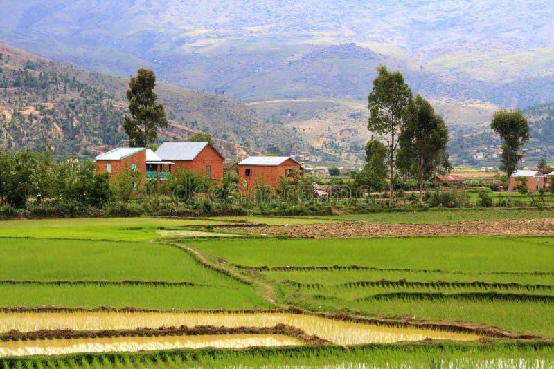 Vue rurale type du Madagascar image libre de droits
