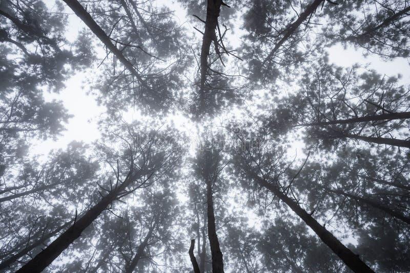 Vue scénique d'arbre très grand et grand dans la forêt dans le morni images stock