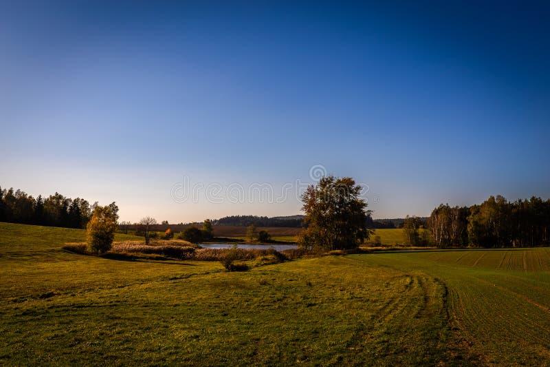 Vue scénique de petit étang dans le pré vert avec quelques arbres, automne en montagnes de Tchèque Moravian près de Hamry NAD Saz images libres de droits