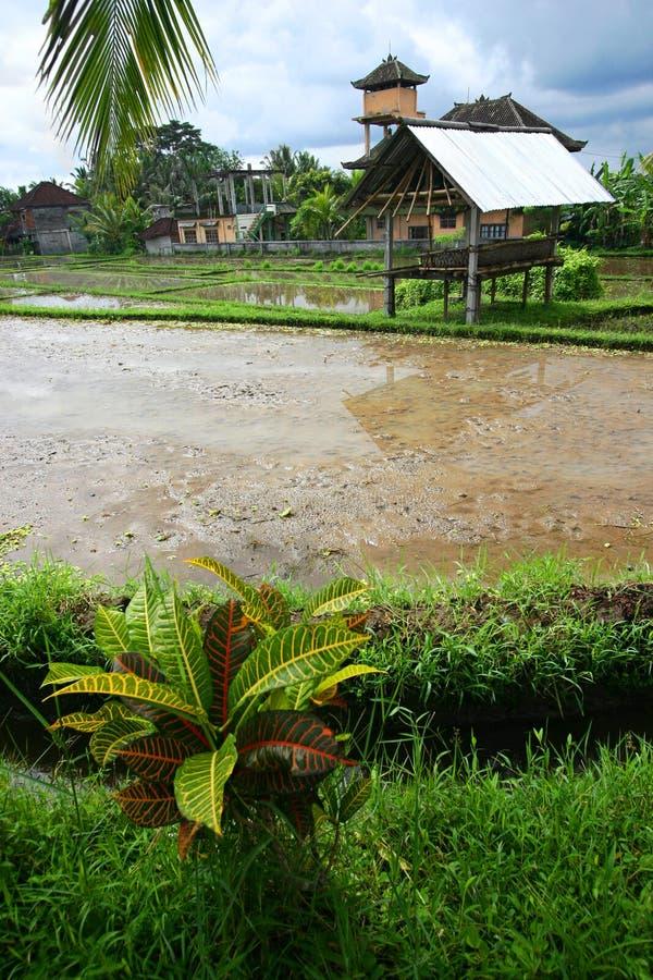vue scénique de riz de hutte de zone de fermier de bali image libre de droits