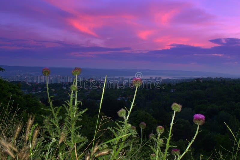 Vue scénique de wildflowers crépusculaires de ville de Varna photo libre de droits