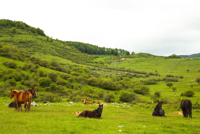 Vue scénique des chevaux au pâturage un jour nuageux photographie stock libre de droits