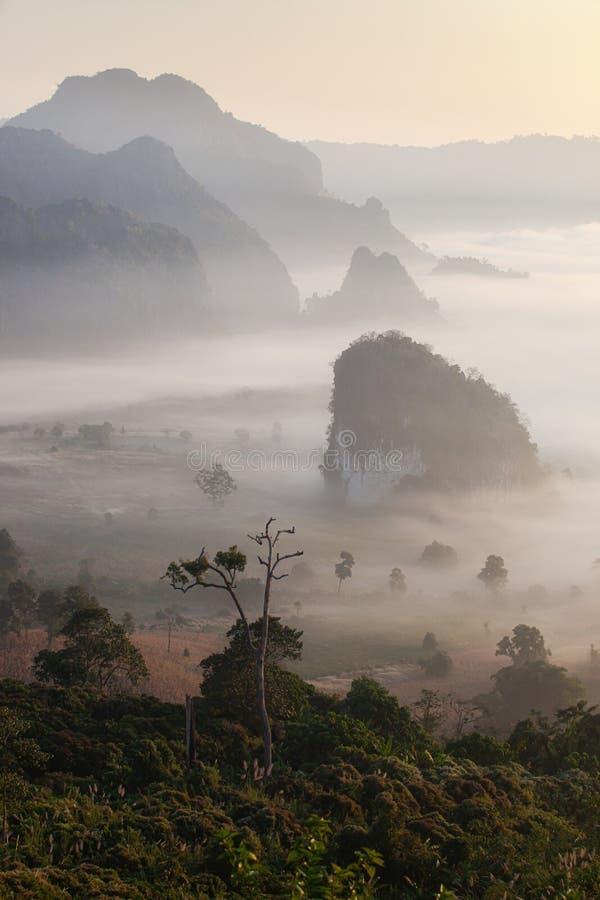 Vue scénique et brouillard de paysage de montagne sur la colline en ka Forest Park pendant le lever de soleil, point de repère na image libre de droits