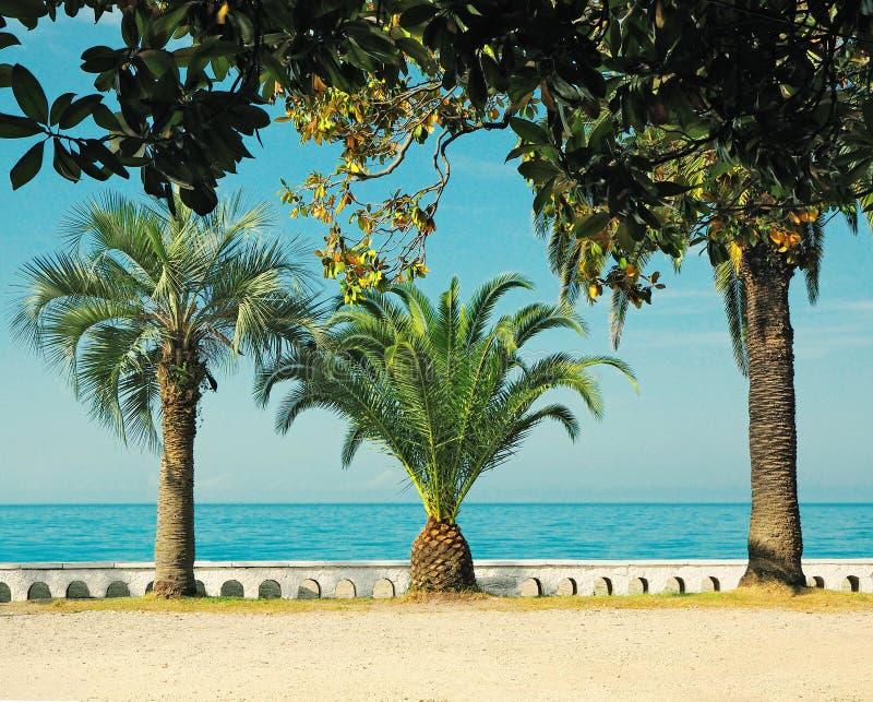 Vue scénique panoramique de plage avec des palmiers photos stock