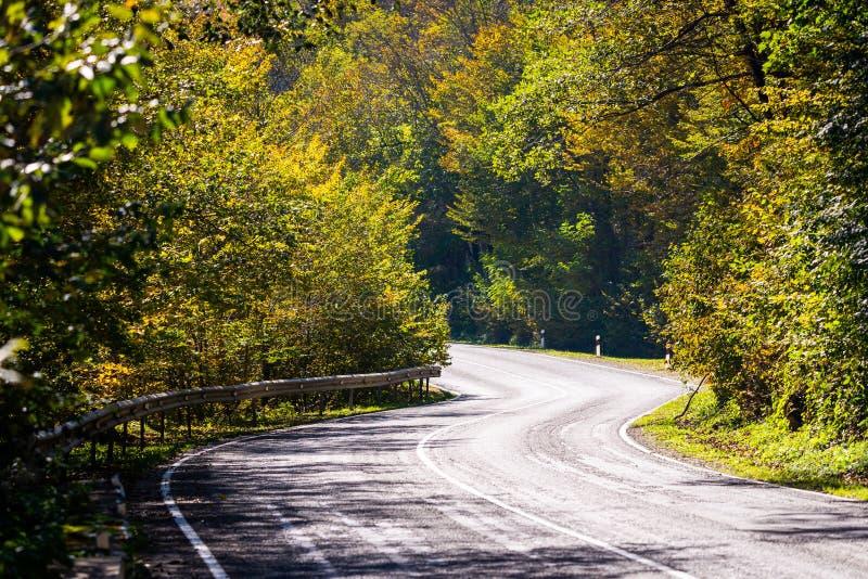 Vue sc?nique d'une nouvelle route par des arbres d'automne photos libres de droits