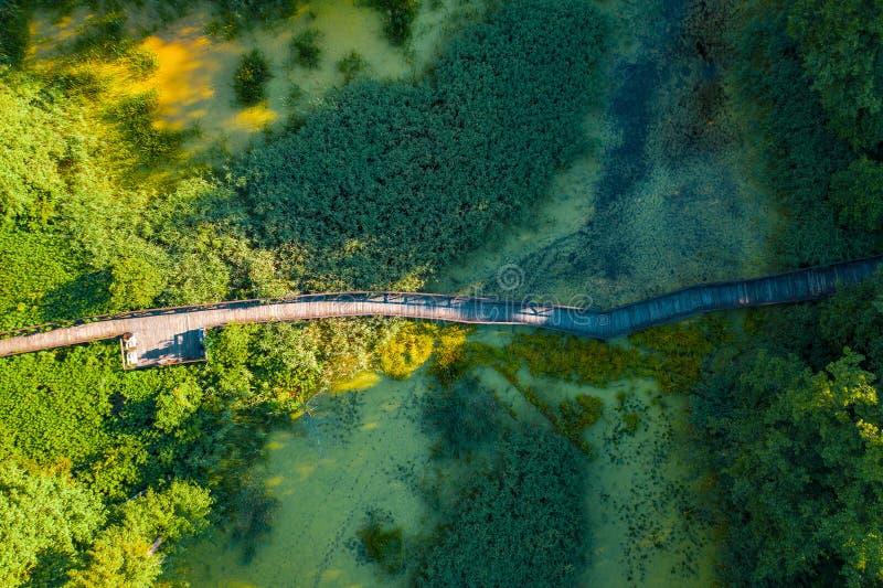 Vue supérieure aérienne de voie en bois de passerelle au-dessus de rivière marécageuse ou marécageuse avec les bosquets de végéta photos libres de droits