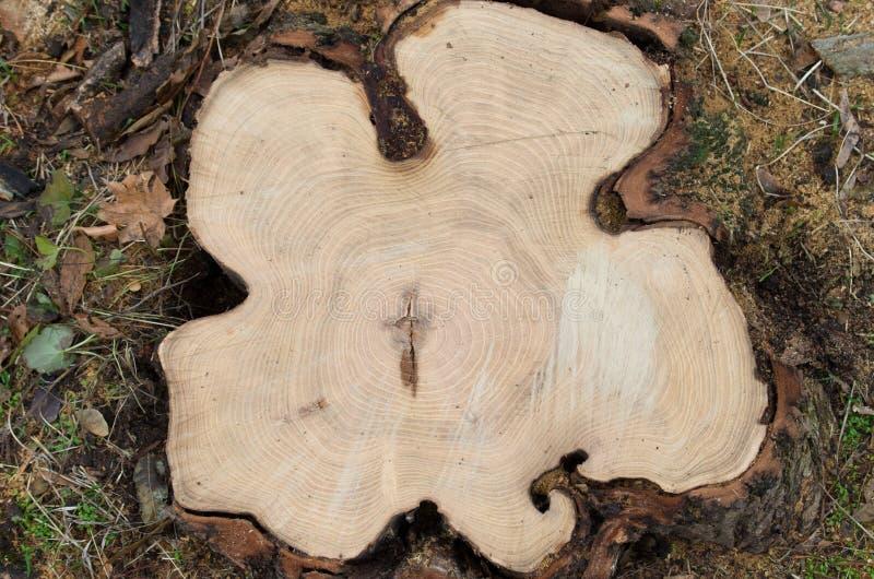 Vue supérieure d'un arbre de coupe photo libre de droits