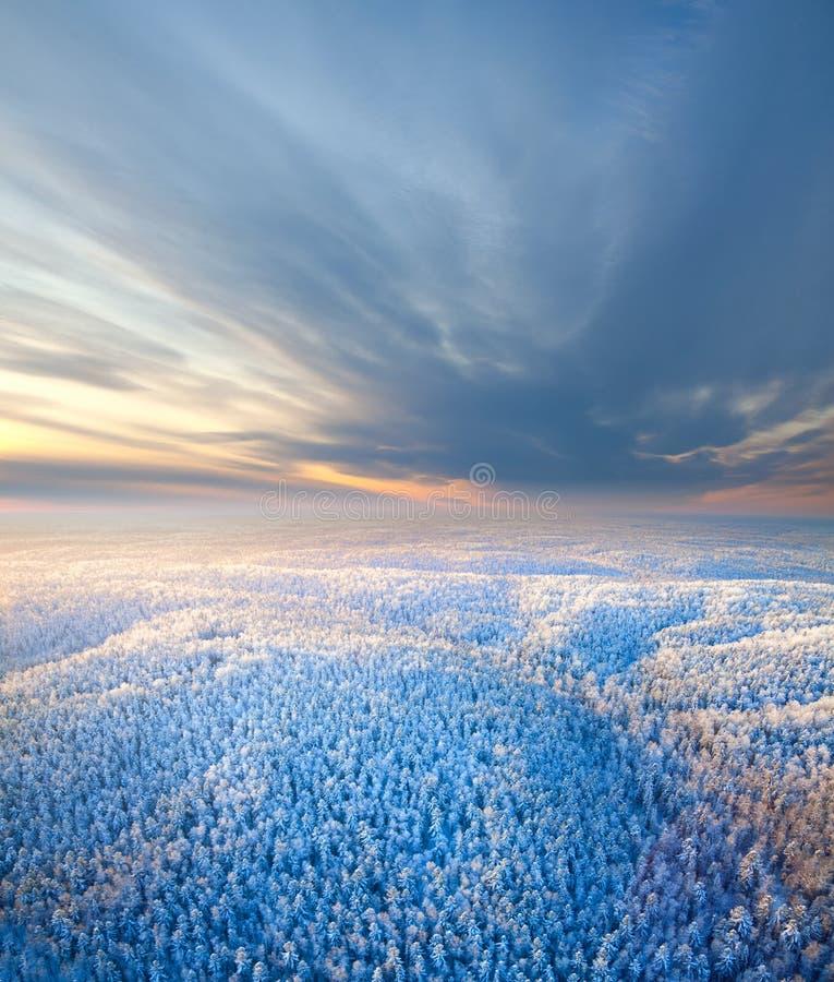 Vue supérieure de forêt au matin d'hiver image stock