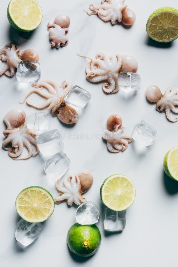 vue supérieure de petits poulpes avec des chaux et des glaçons sur la lumière photo libre de droits