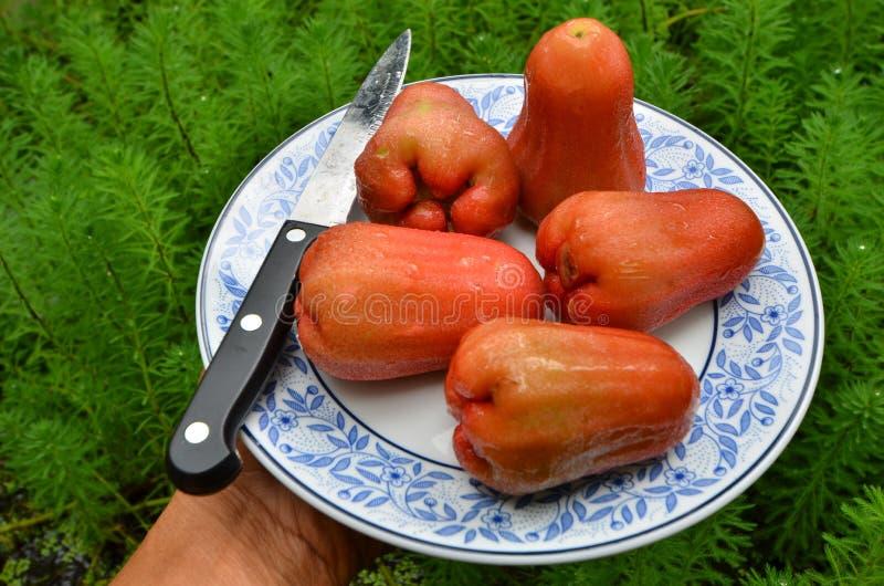 Vue supérieure de plat frais de pomme rose photos stock
