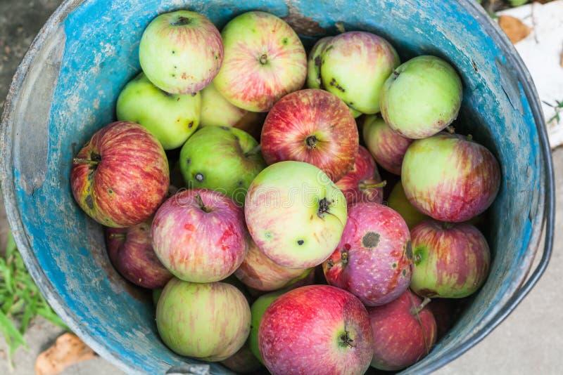 Vue supérieure de seau avec les pommes fraîches de ventis photographie stock libre de droits