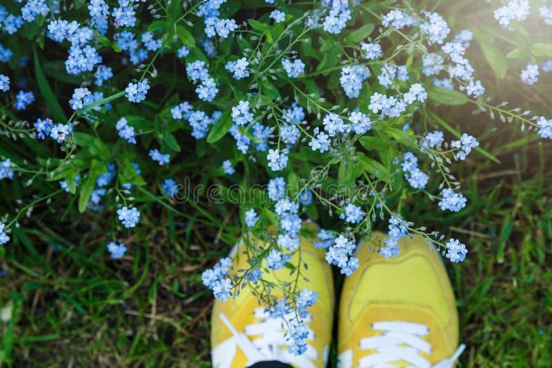Vue supérieure des espadrilles jaunes sur la pelouse verte pleine de petites fleurs bleues Bonjour été ! Nature photographie stock